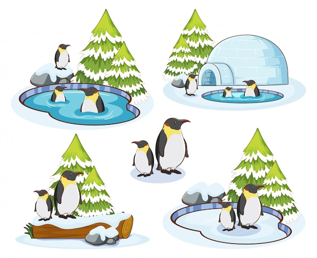 Penguins in snow winter