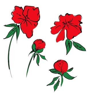 모란 손으로 그린 꽃 모란