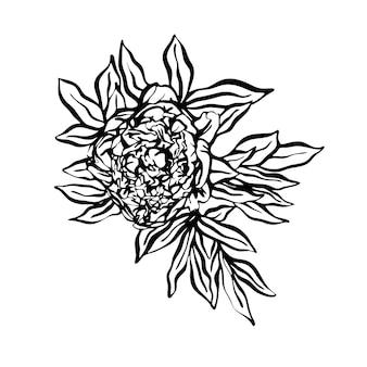 牡丹の手描きイラストをグラフィックスタイルで。グリーティングカード、招待状、印刷、テキスタイルのデザイン