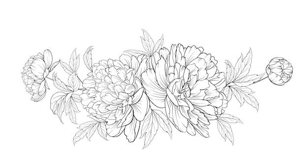 Peonies hand drawn illustration