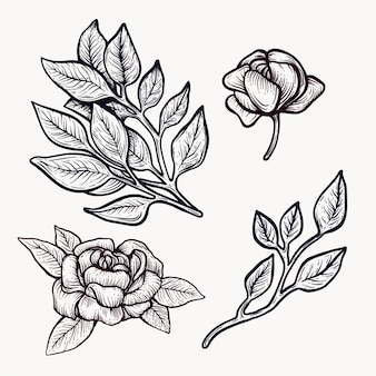 Peony blooming flowers hand drawn isolated outline clipart.