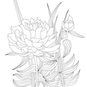 Цветок пиона и бутон в листьях. раскраски страниц книги. монохромный цветочный фон.