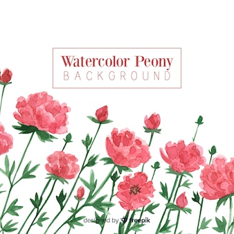 Peony flower background in watercolor style