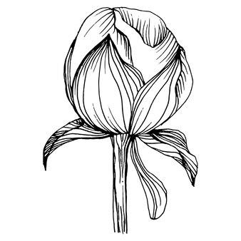 牡丹の花、ヴィンテージのイラストを彫刻 Premiumベクター