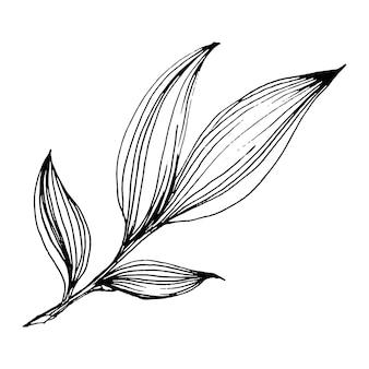 牡丹の花、ヴィンテージのイラストを彫刻
