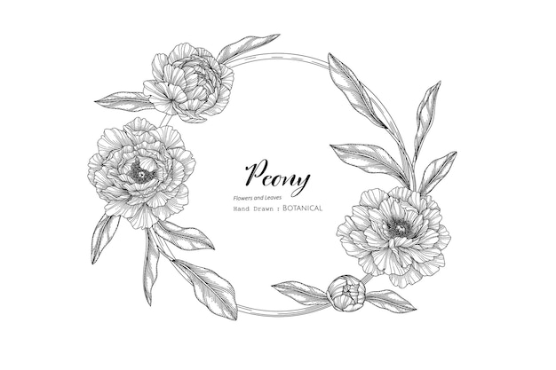 Peony flower and leaf hand drawn botanical illustration with line art.