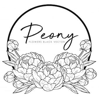 Peony hand drawn line-art illustration  on white background