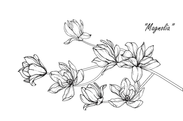 Peony leaf and flower drawings. vintage hand drawn botanical illustrations.