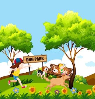 犬の公園で人と犬