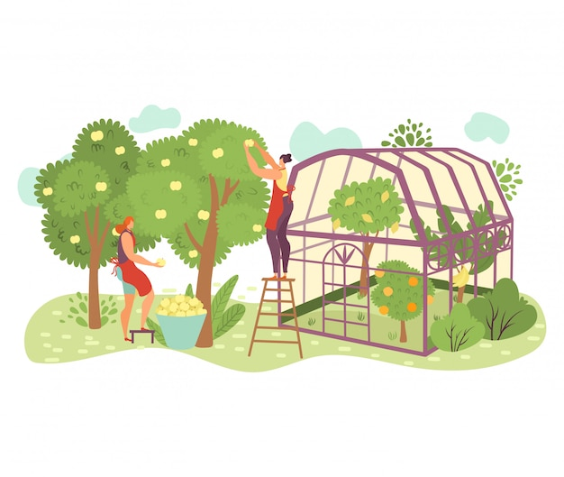 People in garden, organic farming flat   illustration with people gardeners picking apples on farm, take care of plants.