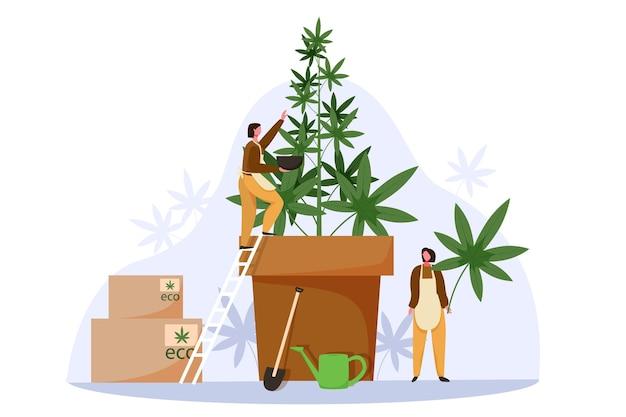 사람들은 합법적인 판매를 위해 대마초를 재배합니다. 마리화나 농장 비즈니스 개념 벡터 일러스트 레이 션. 잡초 재배, 대마 식물, 대마초 농업 산업.