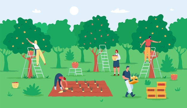 과일을 수확하는 사람들 농부들은 정원에서 사과를 수집합니다. 농업 노동자들은 나무에서 과일을 따고 있습니다.