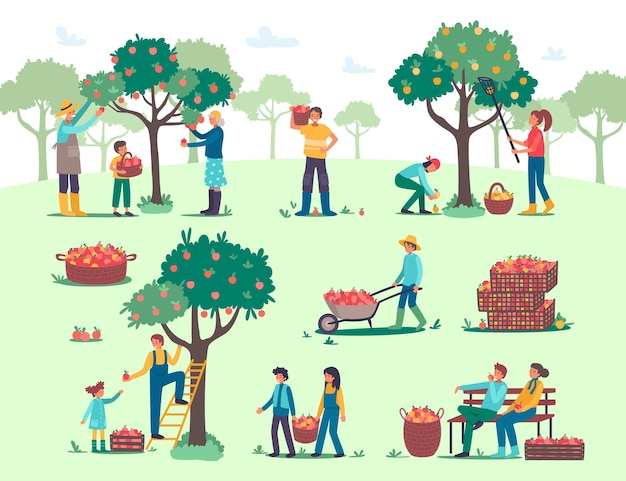 People harvesting picking apples in farm garden illustration