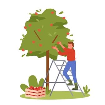 사람들은 사과를 선택합니다. 가을 정원에서 일하는 만화 정원사 작업자 남자 캐릭터, 바구니 또는 상자에 잘 익은 사과 과일 따기