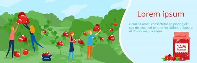 People work on berry eco farm vector illustration.