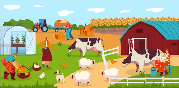 People work on farm, animals cartoon characters, woman milking cow, field harvest  illustration