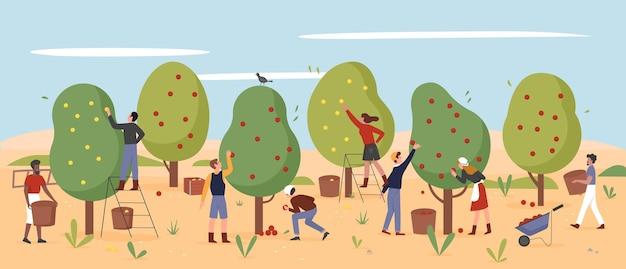 人々は農民が秋の農場の庭の農業労働者の収穫でリンゴを選ぶように働きます
