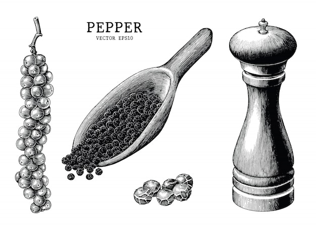 Pepper collection hand draw vintage isolated on white background