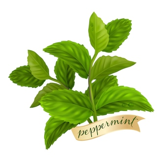 Лист перечной мяты, натуральное эфирное масло
