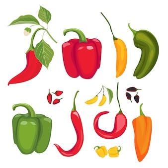 피망. 뜨거운 향신료 신선한 jalapeno 파프리카 카이엔 벡터 만화 붉은 고추 컬렉션. 그림 칠리 향신료, 매운 빨간 카이엔