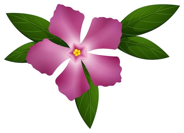 ピンク色のツルニチニチソウの花
