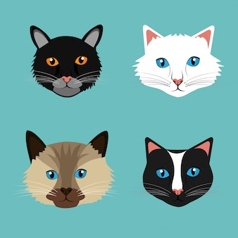 Pet  cat design.