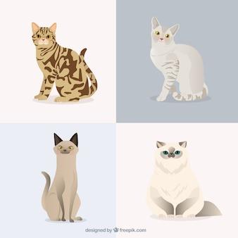 Pet кошек пакет