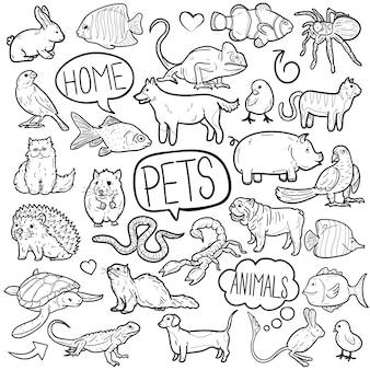 Pet home friend animal