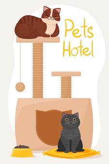 Гостиница для домашних животных. милый кот на кровати и серый кот возле кошачьего домика