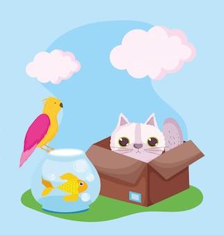 애완 동물 가게, 고양이 상자 물고기와 새 동물 국내 만화