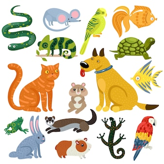 Pets colorful icons set