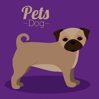 Pets design