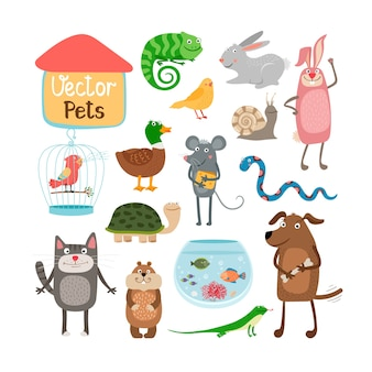 Pets illustration isolated on white background