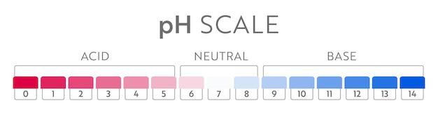 Ph 값 스케일 차트. 산-염기 균형 인포그래픽. 교육 포스터