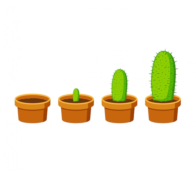 Phases cactus growth isolated on white background