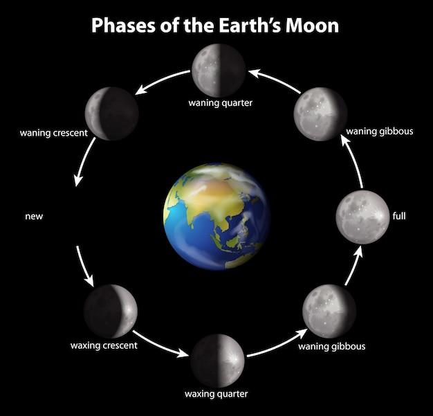 Фазы луны земли Premium векторы
