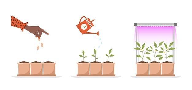 식물 램프 아래 냄비에서 자라는 단계 묘목