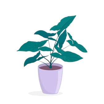 Philodendron. 냄비에 상록 낙 엽 집 식물