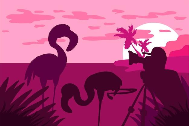 Фотограф фотографирует фламинго на природе. панорама тропической дикой природы. естественная сцена. пальмовый остров в розовых тонах. закат и восход солнца. путешествующий видеооператор. вектор