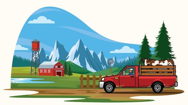 농장에서 소를 운반하는 트럭을 타십시오.
