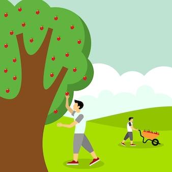 Picking apple fruit illustration