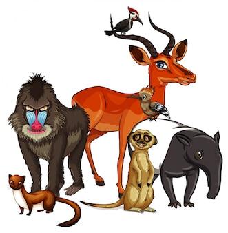 많은 동물의 사진
