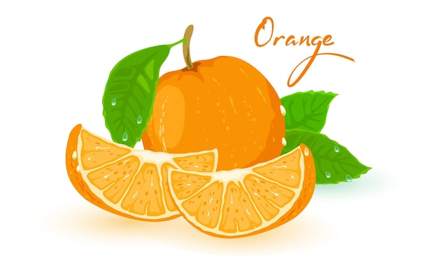 Picture shows ripe orange with green leaves and slices on foreground isolated illustration