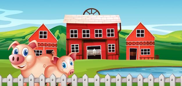 田舎の農場で豚