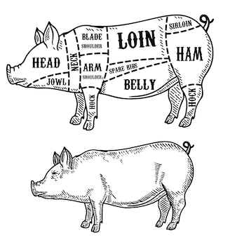 Pig butcher diagram. pork cuts.  element for poster, card, emblem, badge.  image