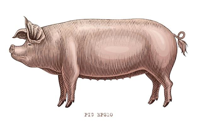 Pig cow in engraivng style