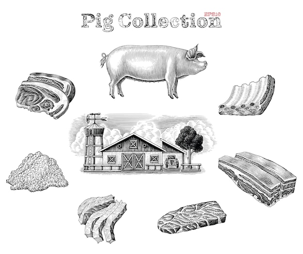 Pig elements black and white set in engraving style