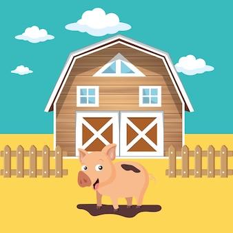 Pig in the farm scene