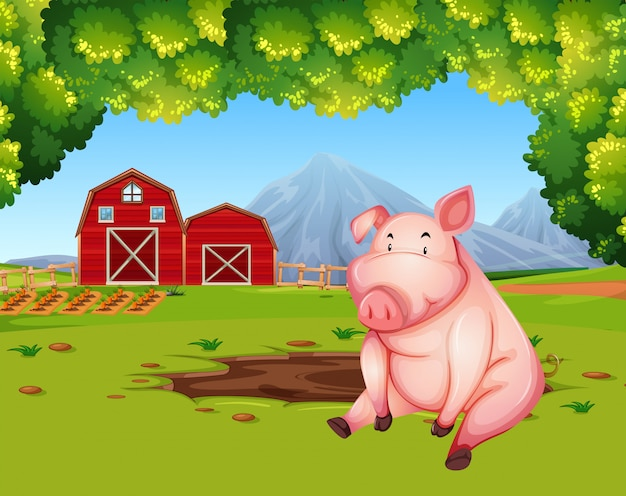 Pig at the farmland landscape