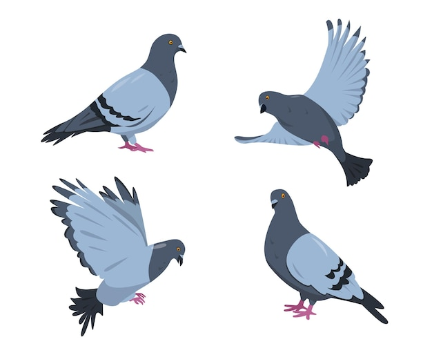 비둘기 새 세트. 흰색 배경에 고립 된 다른 포즈에 비둘기입니다.